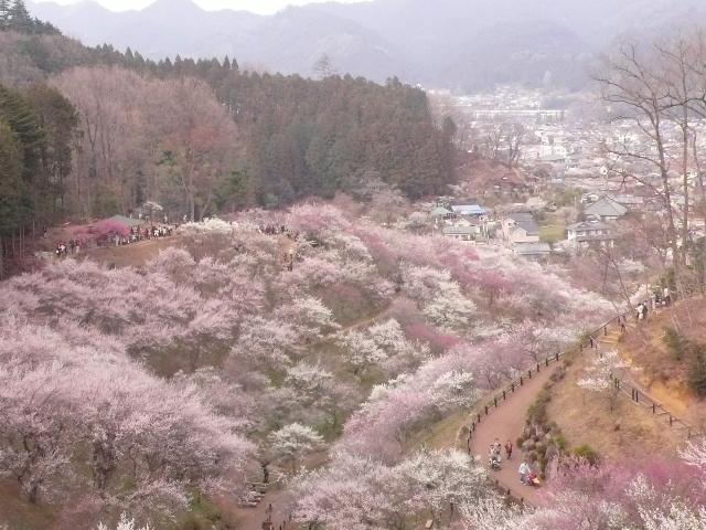 2008.3.23 青梅  006.jpg