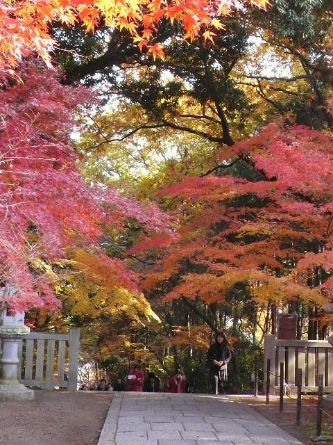 2008年12月京都 033.jpg
