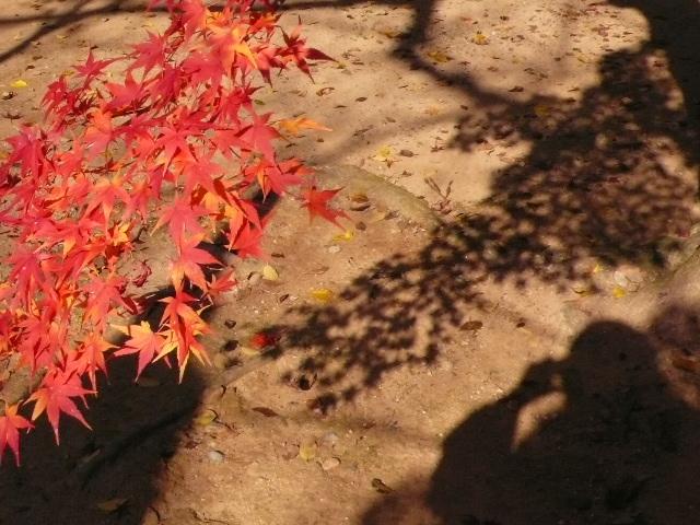 2008年12月京都 034.jpg