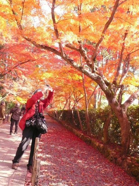 2008年12月京都 058.jpg