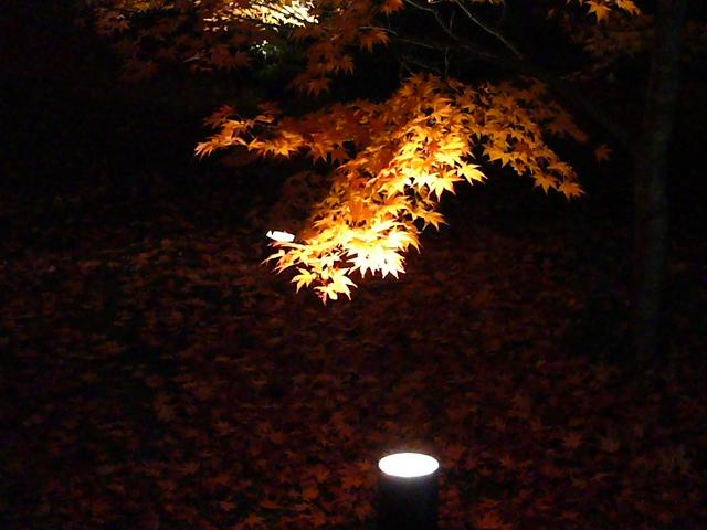 2008年12月京都 131.jpg
