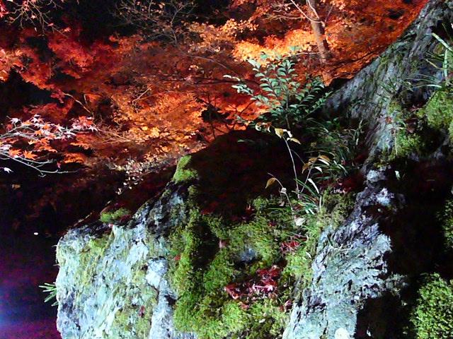2008年12月京都 132.jpg