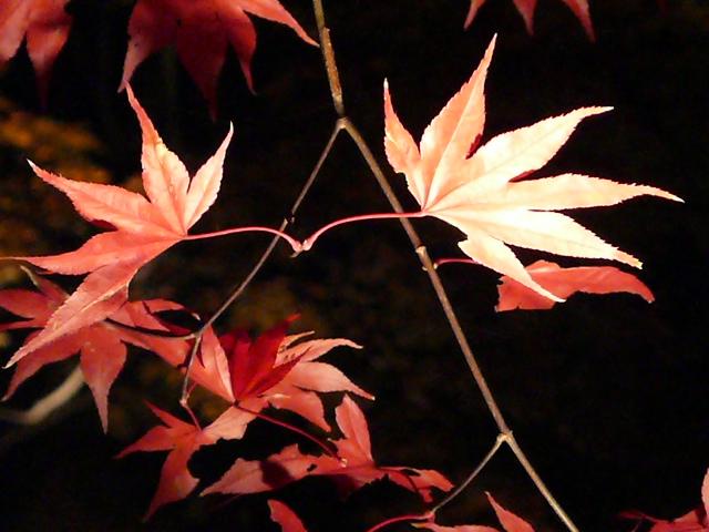 2008年12月京都 134.jpg