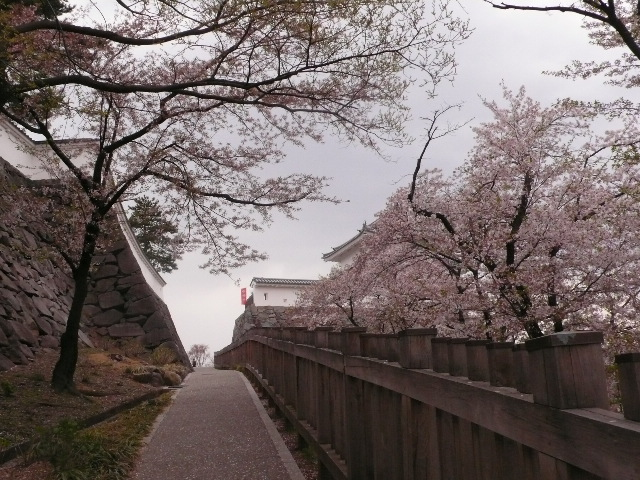 2008.4.7. 甲府城と新府城 007.jpg