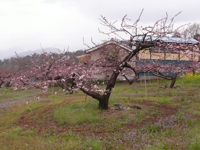 2008.4.7. 甲府城と新府城 009.jpg