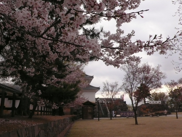 2008.4.7. 甲府城と新府城 024.jpg