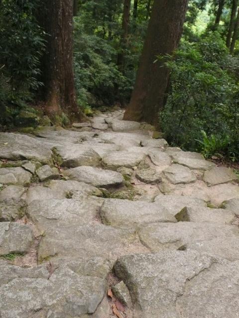 2008,7和歌山の 112.jpg