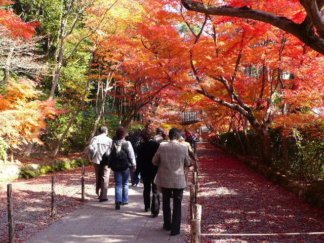2008年12月京都 054.jpg