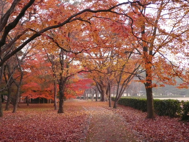 2008年12月京都 146.jpg